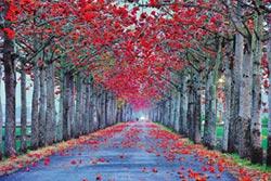 外出顧健康 擁抱大自然森呼吸