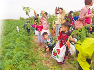 台南將軍胡蘿蔔 外銷可望破紀錄