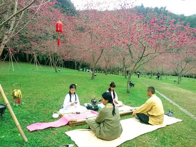在2月16日時,在九族文化村的櫻花林還有一場櫻花茶會,邀請民眾在櫻花樹下品日月潭紅茶。