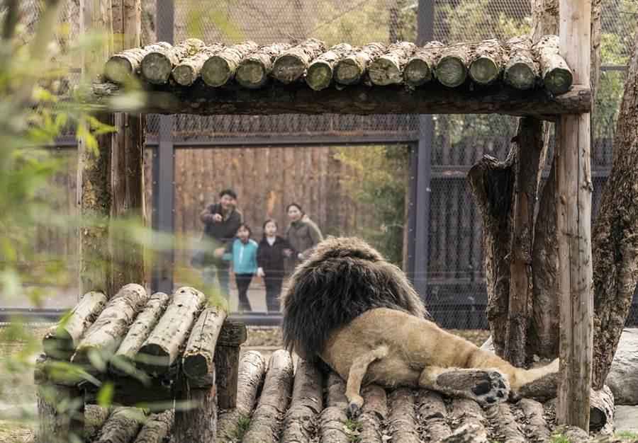 """《超""""人""""氣動物園》劇照。(圖/車庫娛樂提供)"""