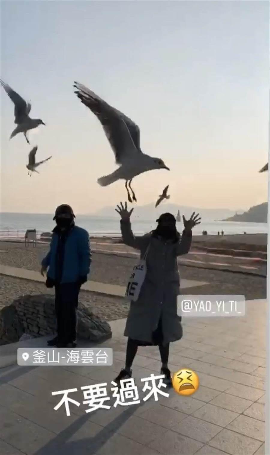 海雲台親人的海鷗們嚇的姚以緹花容失色。(瑞光家族提供)
