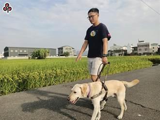 法院認定導盲犬是「寵物」 導盲犬協會不當繁殖敗訴