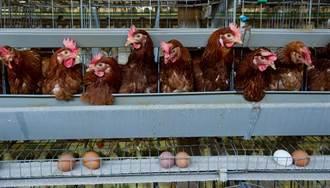 陸家禽業成重災區 有業者損失逾1億人民幣