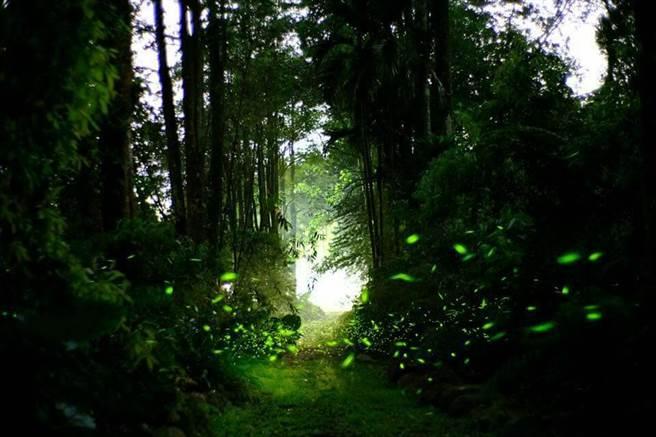 「晶園渡假村」擁有豐富生態,夏季還能賞螢火蟲。(圖取自晶園休閒渡假村 Facebook)