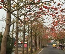 台灣春天不只賞櫻!木棉花熱情如火、向日葵花海好燦爛