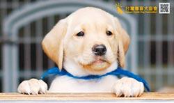 法院認定導盲犬是寵物 協會敗訴