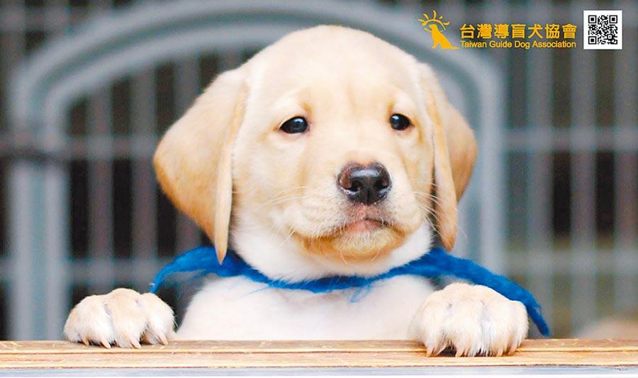 台北高等行政法院認為導盲犬適用動保法「寵物」規範,必須經主管機關許可,並持執照才可繁殖、買賣、寄養。(翻攝自台灣導盲犬協會網站)