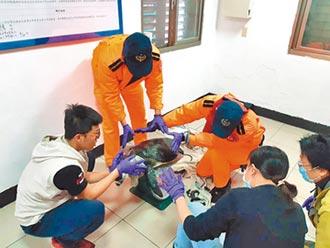 綠蠵龜受困定置網 海巡署救起