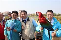 白河木棉花季登場 金剛鸚鵡放飛吸遊客嘗鮮