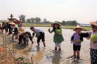 後壁農事體驗活動 親子合力體驗插秧趣