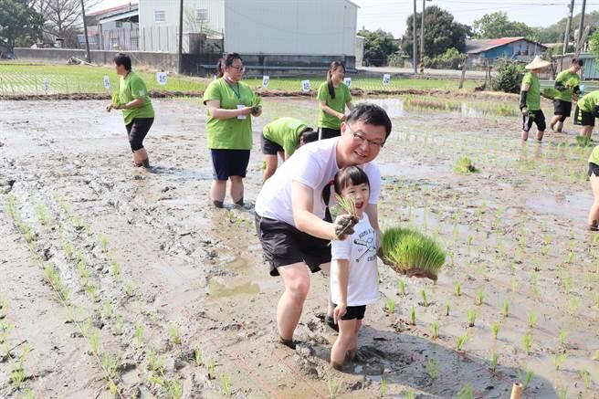 台南後壁頂長社區農事體驗活動,有近50名親子一起體驗插秧。(劉秀芬攝)