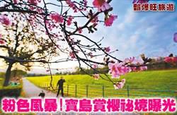 《翻爆旺旅遊》粉色風暴!寶島賞櫻祕境曝光