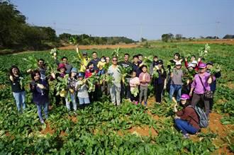 清水紅土菜頭大豐收 大小朋友歡樂拔蘿蔔