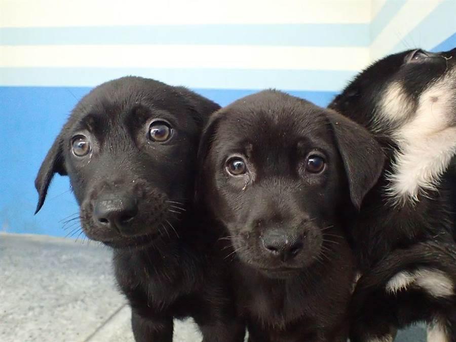 苗栗縣生態保育教育中心近日收容許多年幼小狗。(翻攝照片/何冠嫻苗栗傳真)