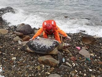 生態浩劫 7保育類海龜同時陳屍東北角海岸