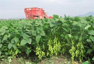 台灣綠金 毛豆外銷產值創29年新高