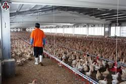 農業外勞不夠用!勞動部再開放1600名給5業別使用