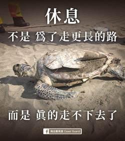 一夜之間失去9隻海龜 海巡署長:死因讓人類汗顏