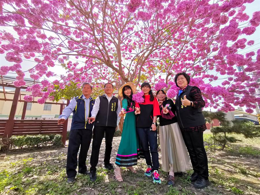 鄉長今天將私藏秘境曝光,這棵盛開的紅花風鈴木坐落在埔鹽鄉南新社區,興安宮旁的小空地。(吳建輝攝)