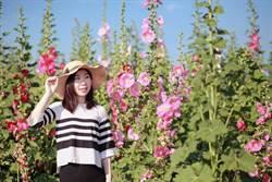 蜀葵花、紅藜花、小麥田!台南學甲創意影片徵件中