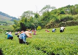紓解農業移工荒 新增1600名