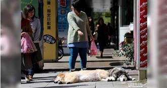 明東北季風增強2地高溫降5度 228連假好天氣