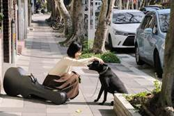 謝震廷女友愛犬走失超心酸 攝影替流浪毛小孩找家