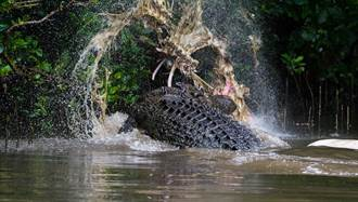 釣魚遇牛漂浮河中央 下秒巨鱷彈出狠咬