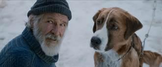 「最猛狗派」哈里遜福特化身療癒系大叔《極地守護犬》連假登場
