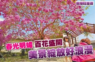 《翻爆旺旅遊》春光明媚 百花盛開  美景綻放好浪漫