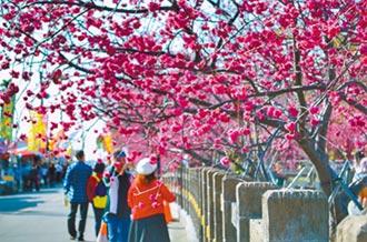 泰安九族 櫻花季開好開滿