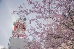 福壽山千櫻園電信塔意外爆紅 彷彿置身東京鐵塔下