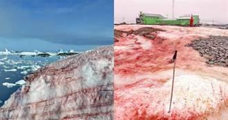 血染南極大地!白雪下生物罕見甦醒…迅速繁殖科學家憂心
