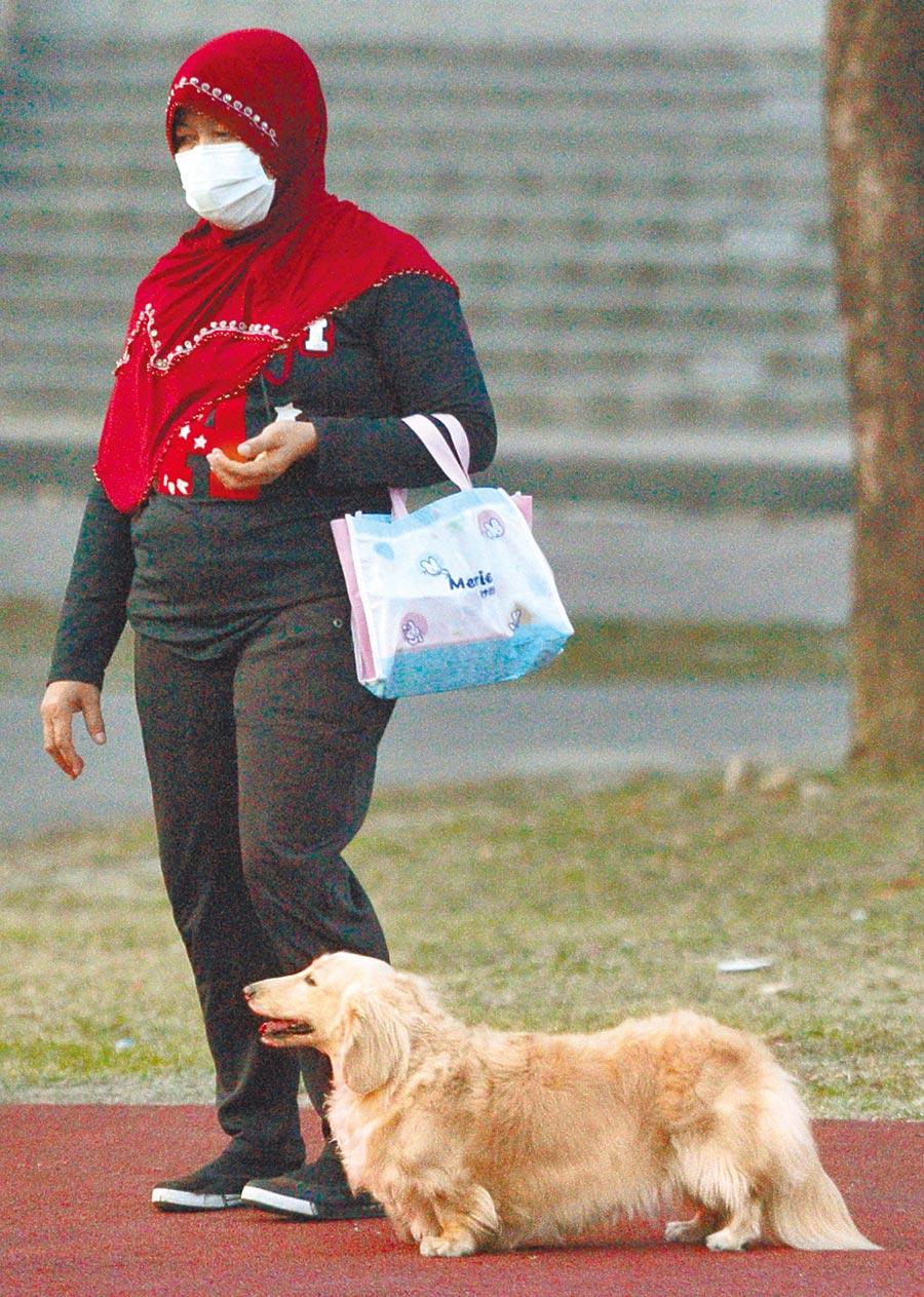 醫師表示,寵物可以投射人的心裡需求,也可以讓主人轉移對疫情的焦慮。(本報資料照片)