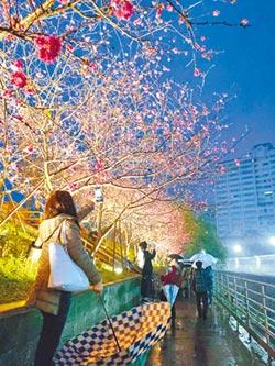 樂活公園八重櫻 熱情邀你來