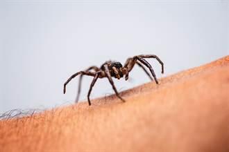 夢境常出現蜘蛛人妻嚇壞 竟與健康有關