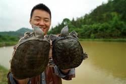 保千億產業鏈 陸緊急撤回龜鱉禁食令