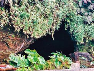蝙蝠洞遊客怕怕 動保處提三不