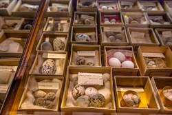 古墓有雞蛋很慘?考古專家陷兩難