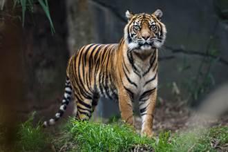 男虔诚向母老虎鞠躬 下秒眾人惊呆