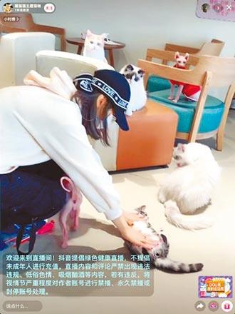 疫情擾市 貓咪咖啡廳也頭疼