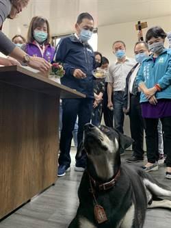 香港寵物犬受感染 侯友宜:新北未發生棄養潮