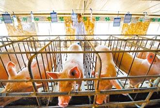 豬價續漲 A股公司賣股養豬