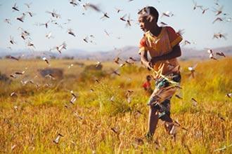 蝗災威脅東非經濟