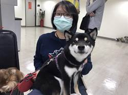 新冠肺炎引爆北市寵物棄養潮?動保處:比去年少