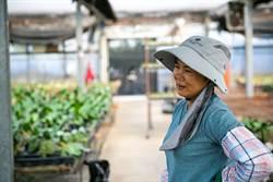 陳麗容創業種蝴蝶蘭 微型創業鳳凰貸款助一臂之力