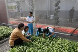 推動食農教育 大里農會繪本體驗務農