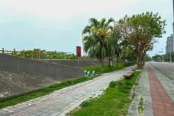 竹北興隆路堤岸將打造頭前溪北岸櫻花步道