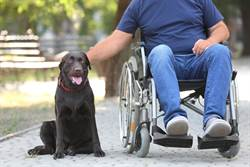 輪椅老翁外出散步 愛犬舉動惹鼻酸