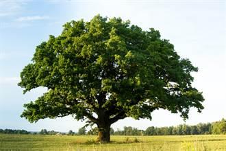 印度新娘婚前要先嫁給樹?原因太奇葩